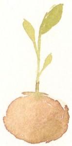 Seedling by Leyton Parker