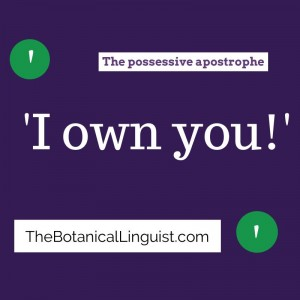 possessive apostrophe