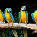 parrot-fashion