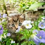 9 cat idioms