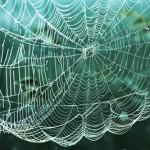 Cobweb. Blow the cobwebs away