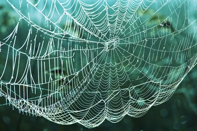 Cobweb. Blow the cobwebs away
