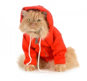 the cat's pyjamas - a cat wearing a hoodie