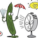 Idiom: as cool as a cucumber