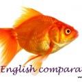 100 English comparatives